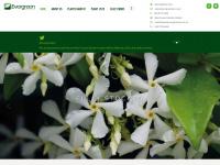 evergreenext.co.uk