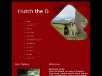 hutchthedog.co.uk