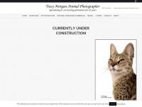 animalphotographer.co.uk