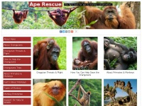 ape-rescue.co.uk