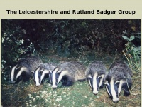 Badgergroup.org.uk