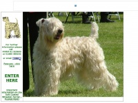 softcoatedwheatens.co.uk