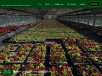 Bellfieldnursery.co.uk
