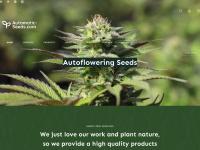 automatic-seeds.com