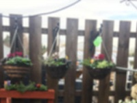 johntrainplants.co.uk